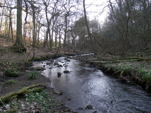 Lodepit Beck (5)